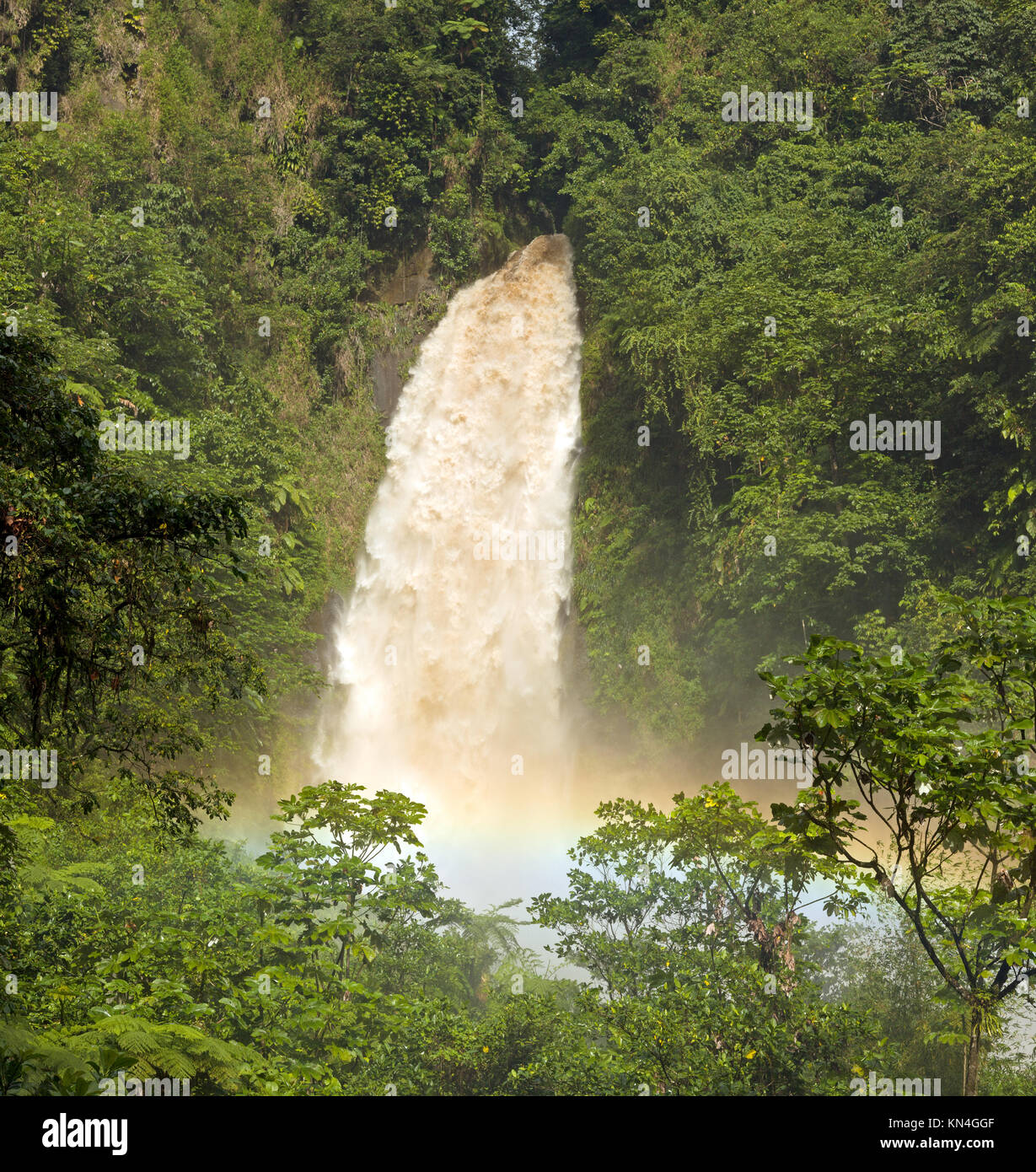 Trafalgar Falls in a green jungle environnement with tree ferns after a heavy rainfall - Stock Image