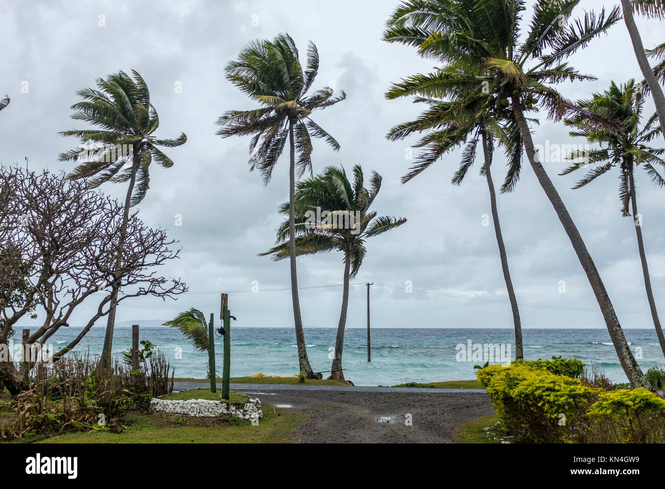 Wind, Palm Trees and telegraph pole, Fiji Islands, Western Pacific, South Pacific - Stock Image
