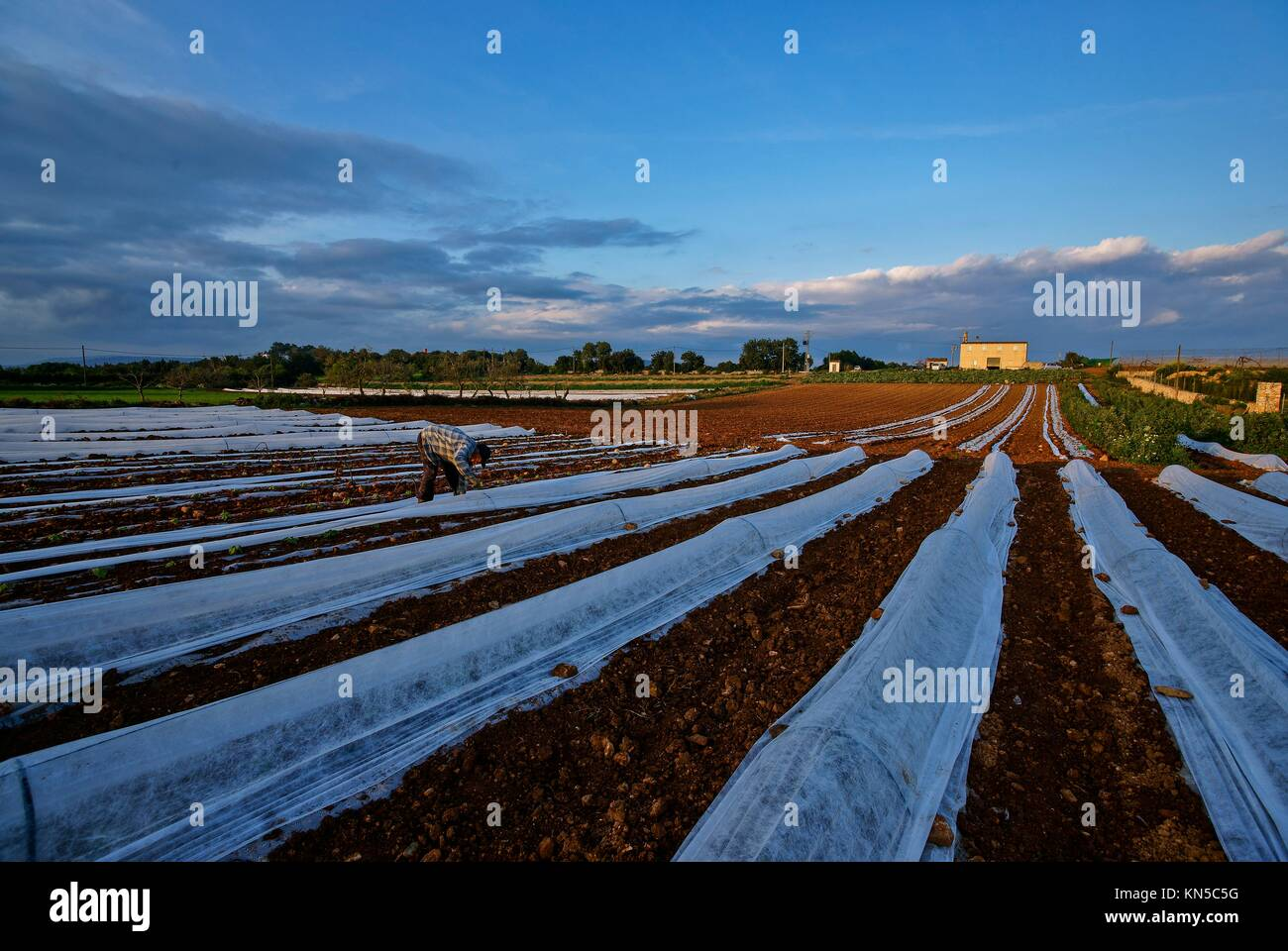 Pla de Manacor. Mallorca. Balearic Islands. Spain. Stock Photo