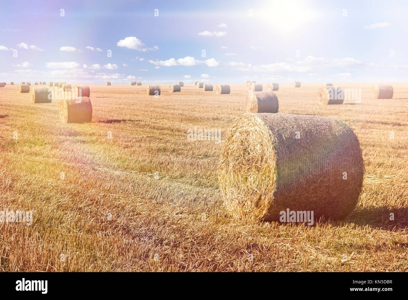 Straw bales landscape in late summer. - Stock Image