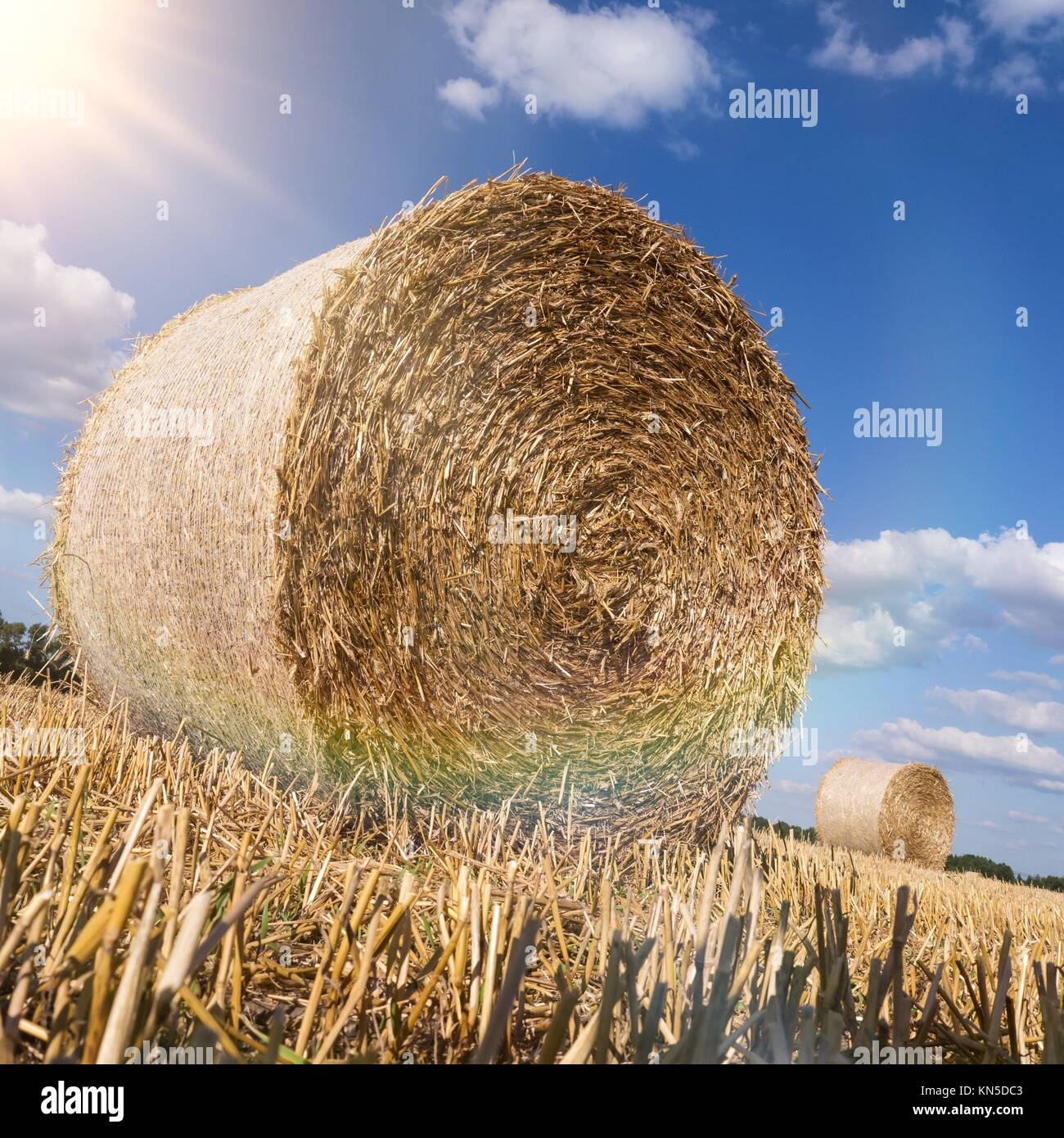 Straw bales in late summer. - Stock Image