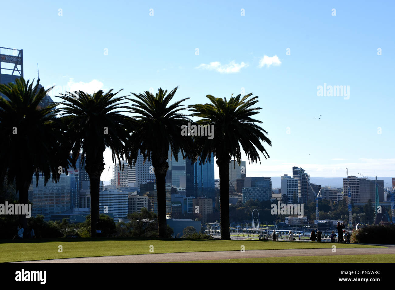 View of Perth from Kings Park with Palm Trees in front - Stock Image