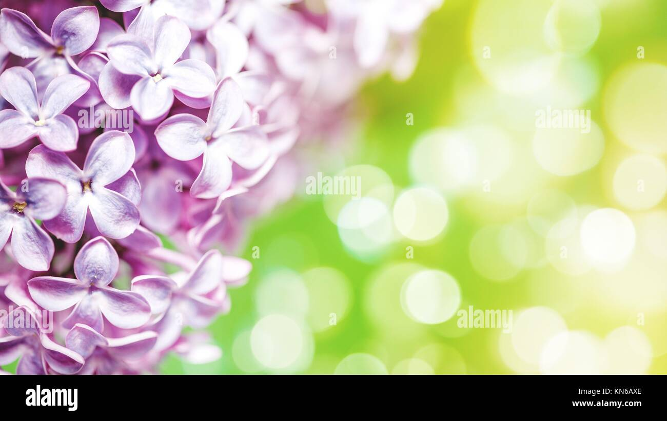 Lilac Flowers With Beauty Bokeh Abstract Floral Backgrounds Stock