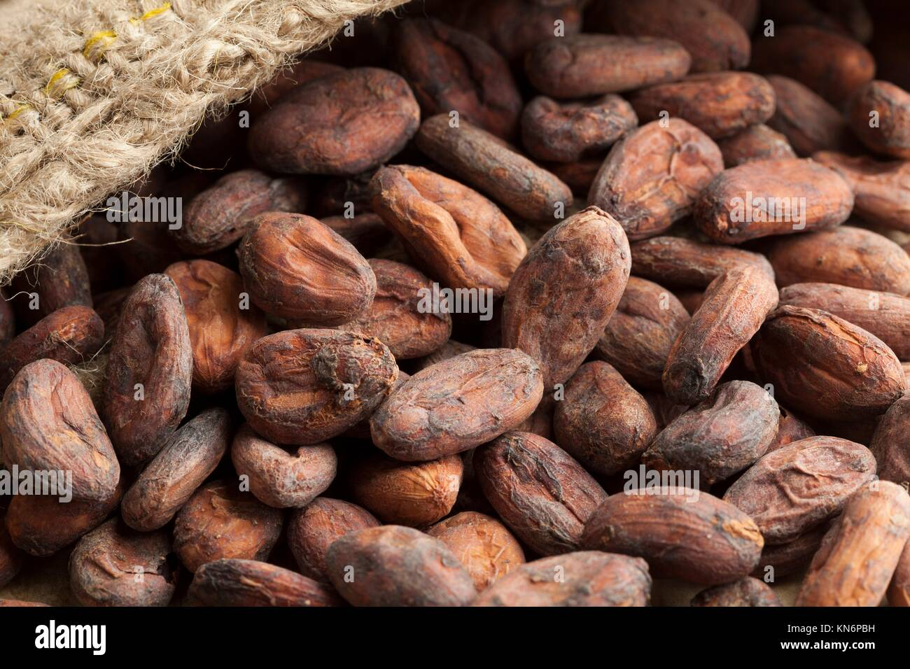 Jute bag full with cocoa beans. - Stock Image