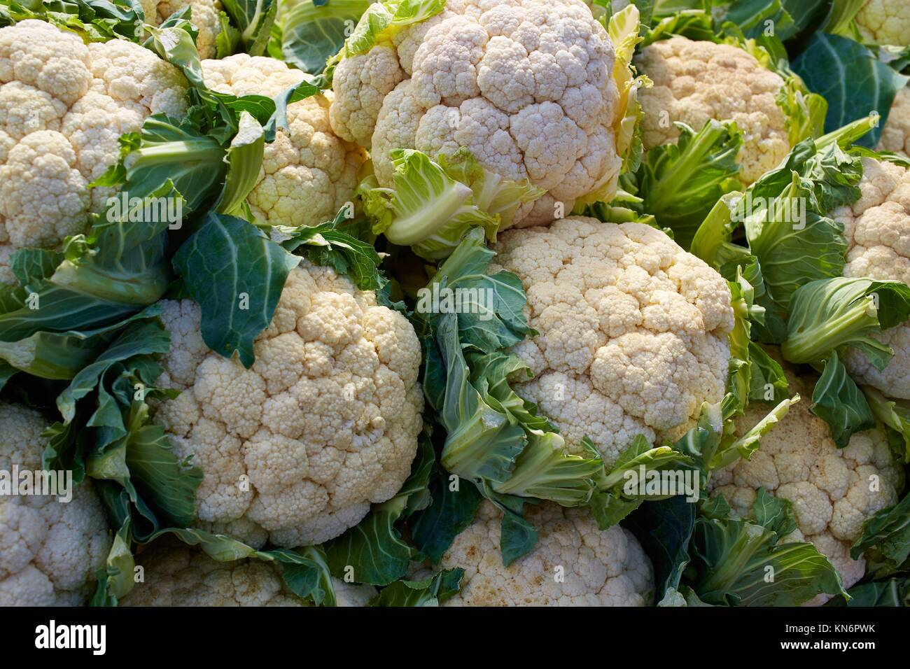 cauliflower cabbage texture pattern stacked in a row at market outdoor. - Stock Image