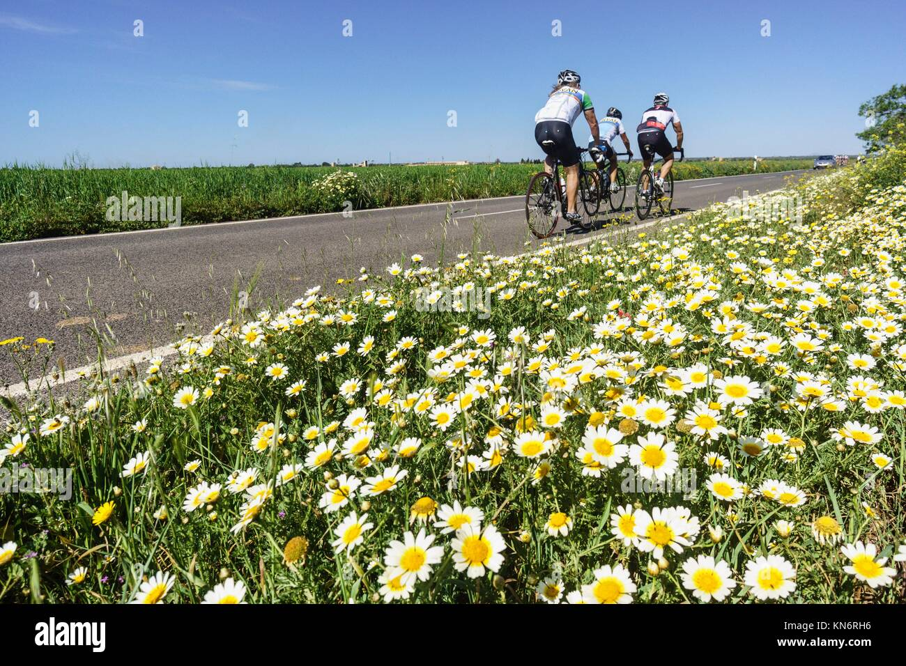 ciclistas en la carretera de Es Trenc, Campos del Puerto , Majorca, Balearic Islands, Spain - Stock Image