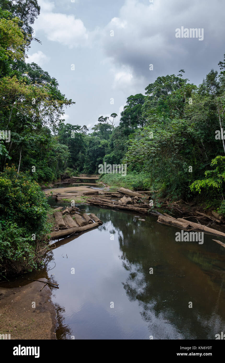 Landscape with tropical river flowing peacefully through lush rain forest of Nigeria, Africa - Stock Image