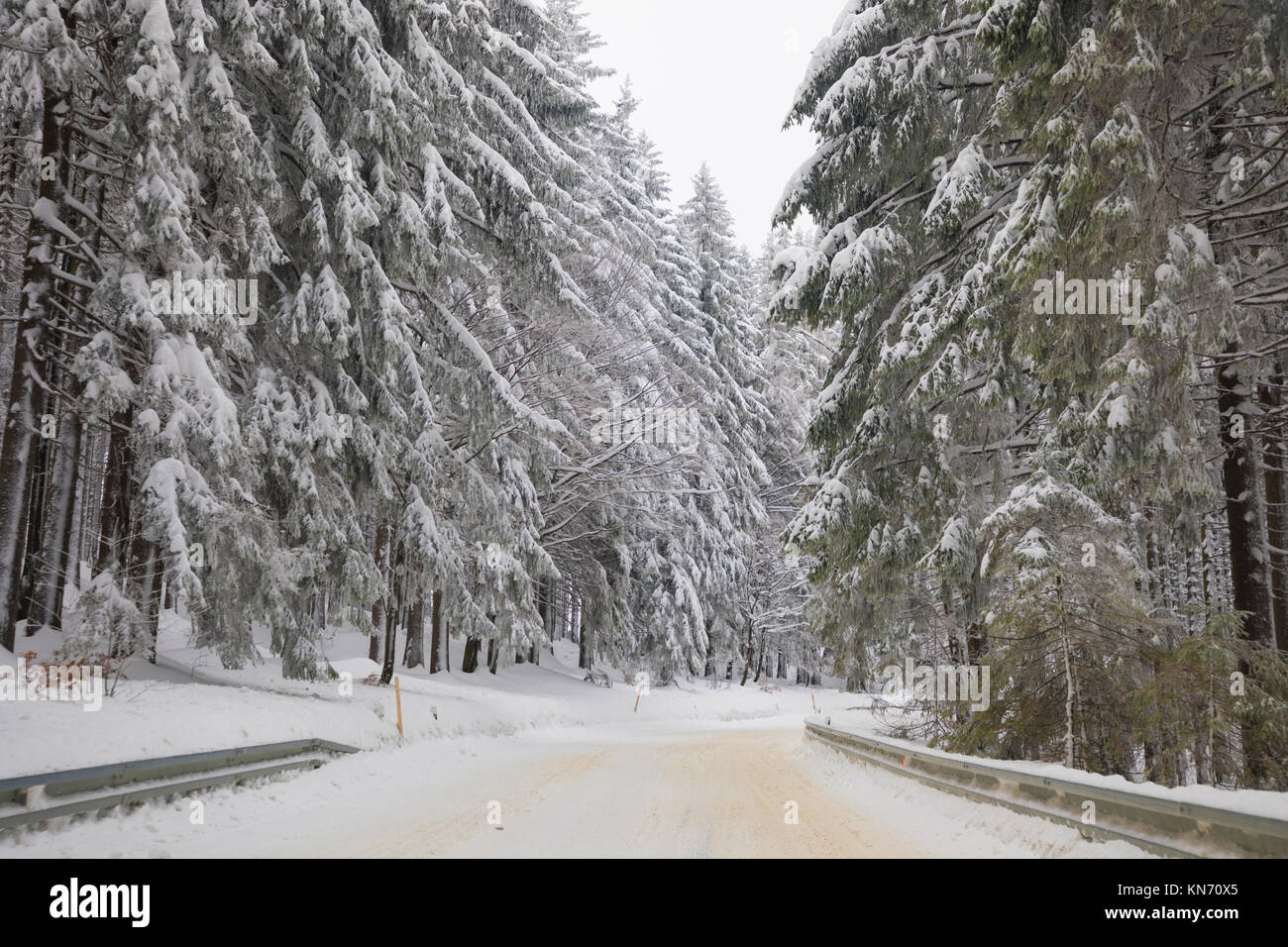 Road and high spruces and snow in mountains - Stock Image