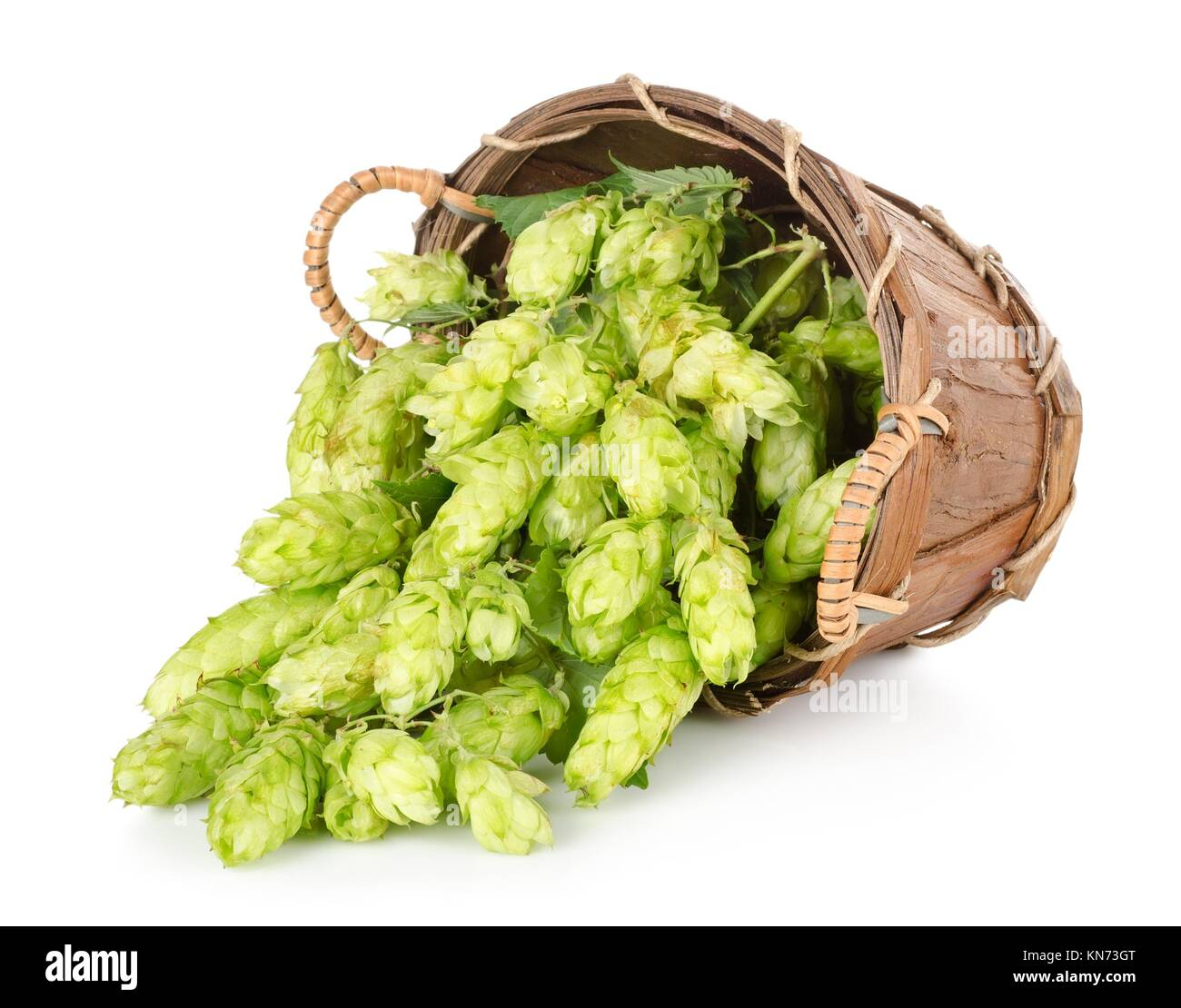 Hops in a wooden basket isolated on white background. - Stock Image