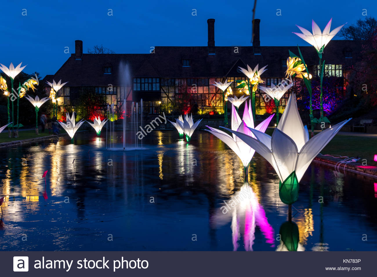 Christmas Glow At Rhs Wisley The Garden Is Staying Open Late Over Stock Photo Alamy