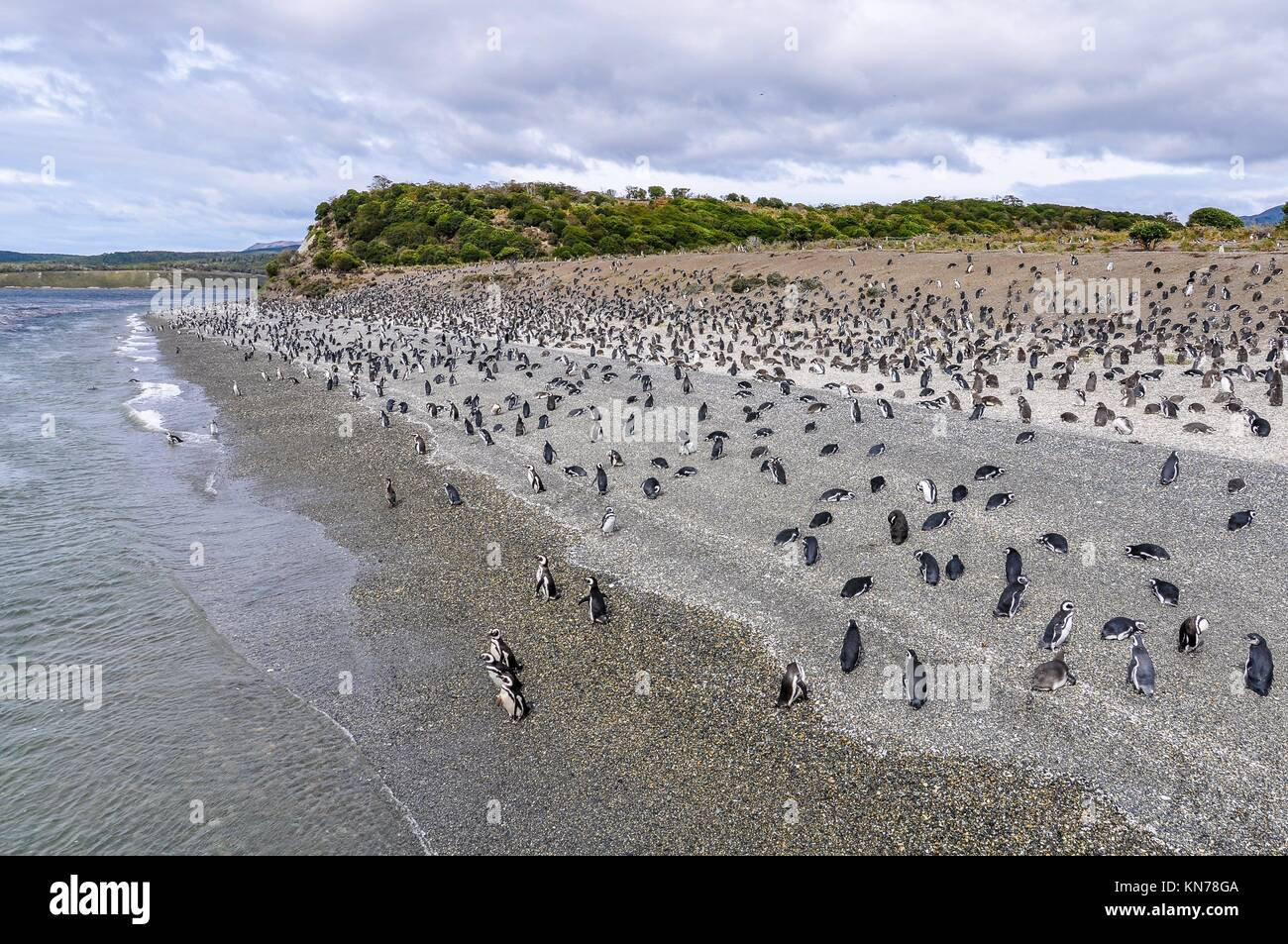 Island of Penguins in the Beagle Channel, Ushuaia, Argentina. - Stock Image