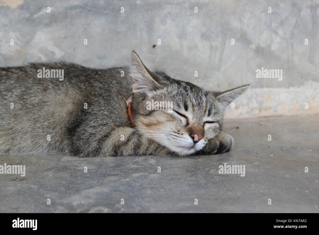 Cat from Lanta Animal Welfare on Koh Lanta, Thailand. - Stock Image