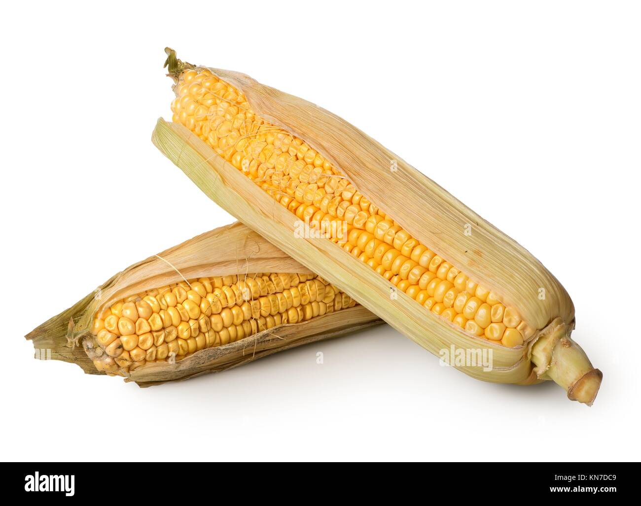 Two ears of corn isolated on a white background. - Stock Image