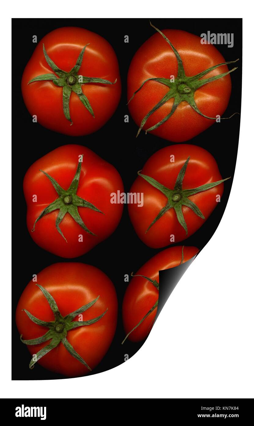 fresh tomatoes on black background curl distortion effect. - Stock Image