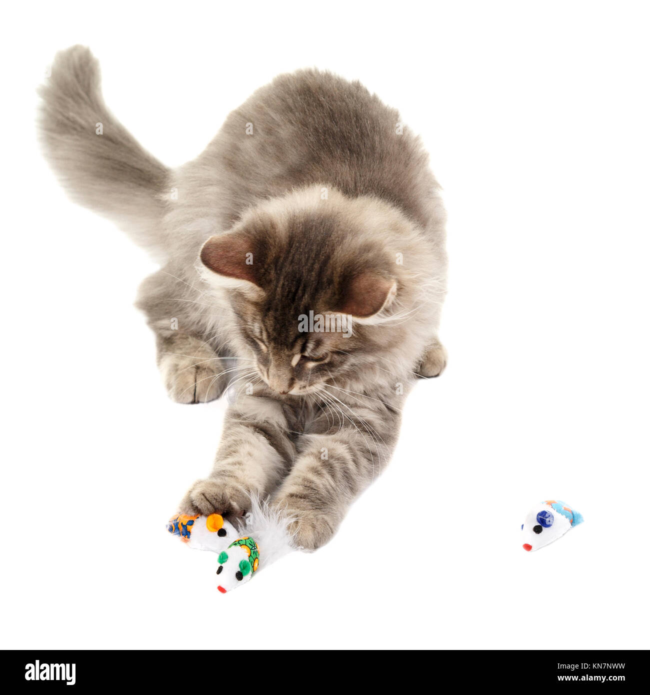 Fluffy Cat Toy Stock Photos Amp Fluffy Cat Toy Stock Images