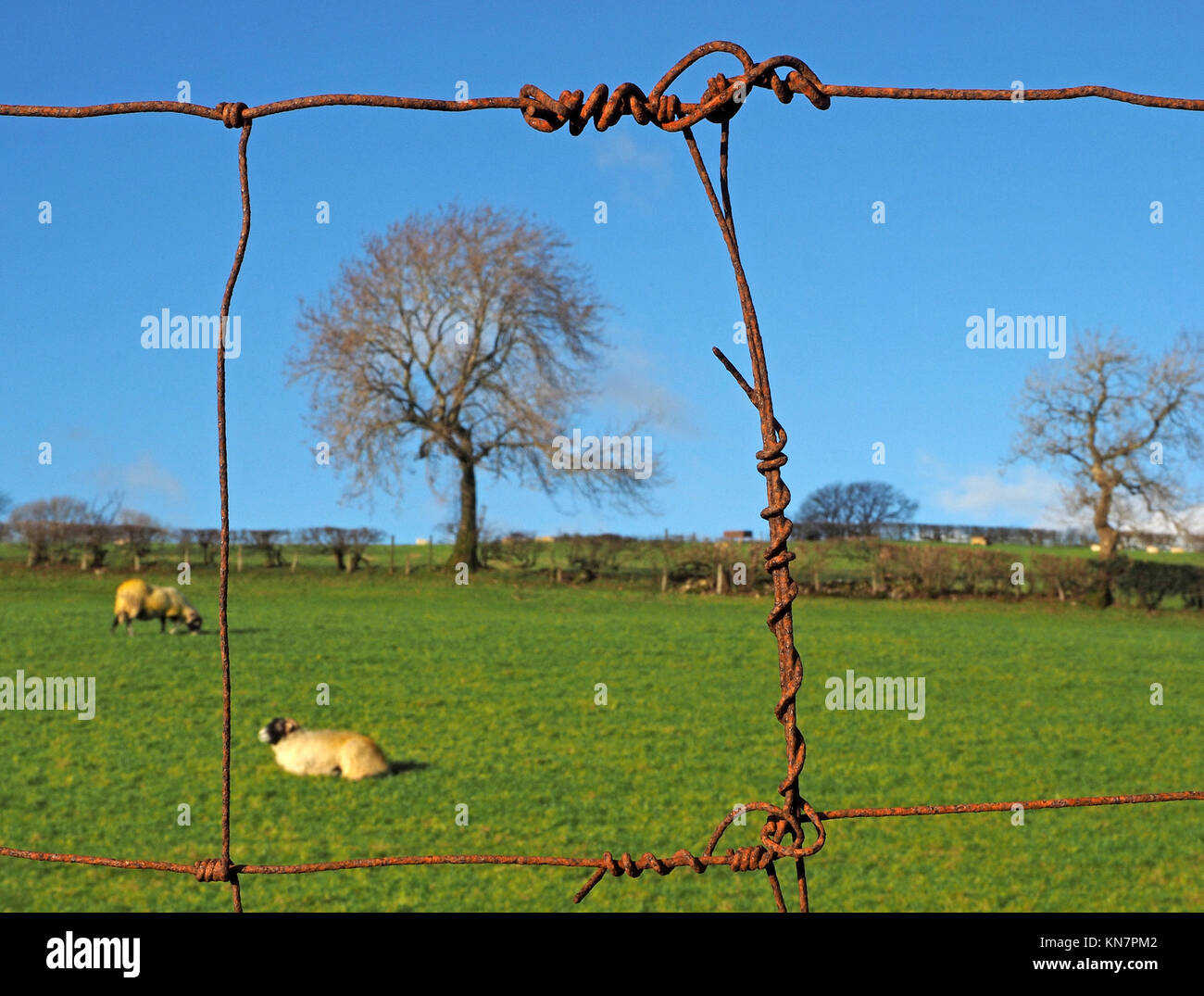 Tangled Fence Wire Stock Photos & Tangled Fence Wire Stock Images ...