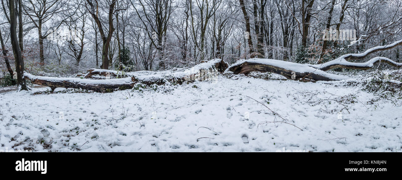 Hampstead Heath covered in snow - Stock Image