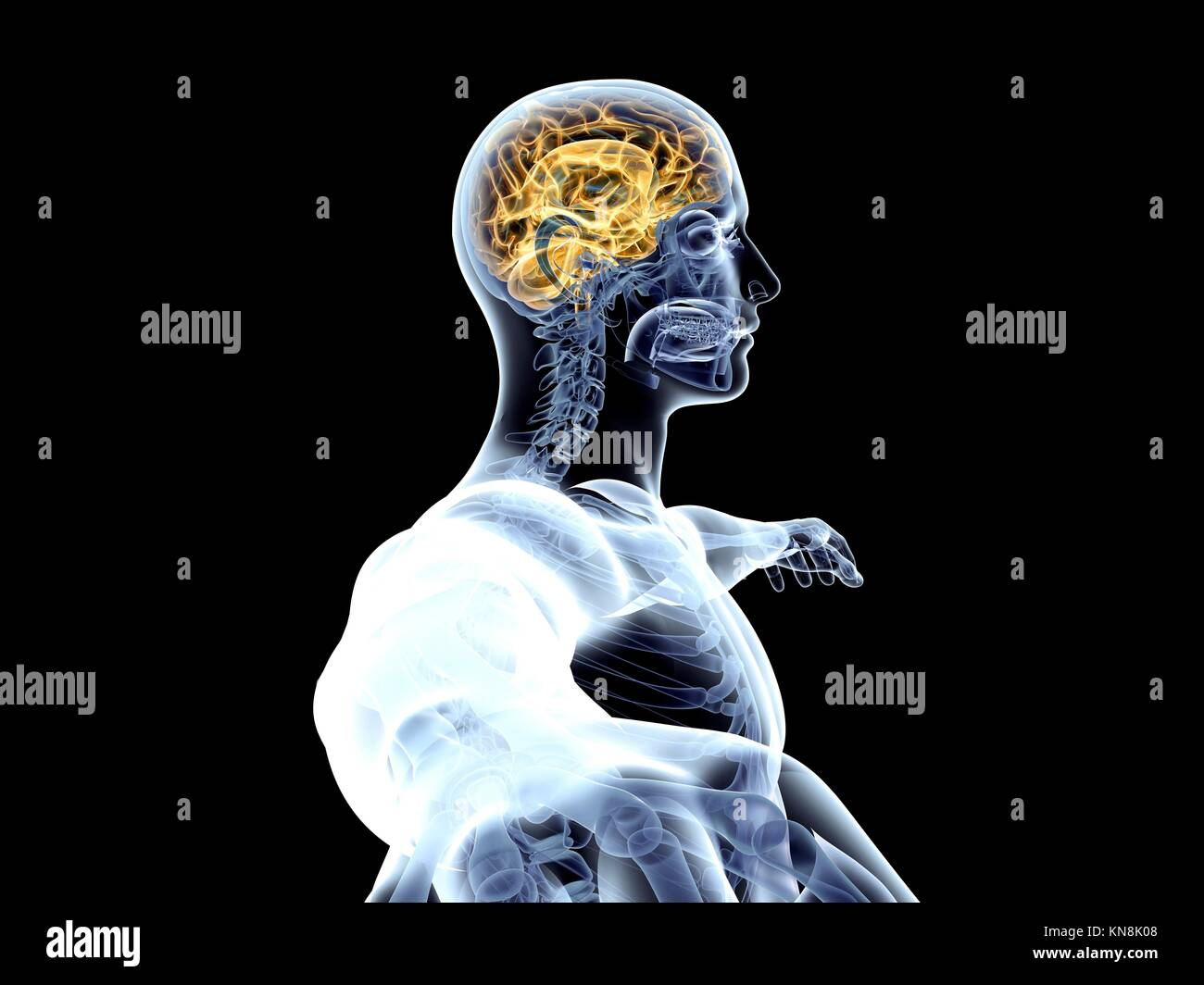 The human Brain. 3D rendered illustration. Isolated on black. - Stock Image