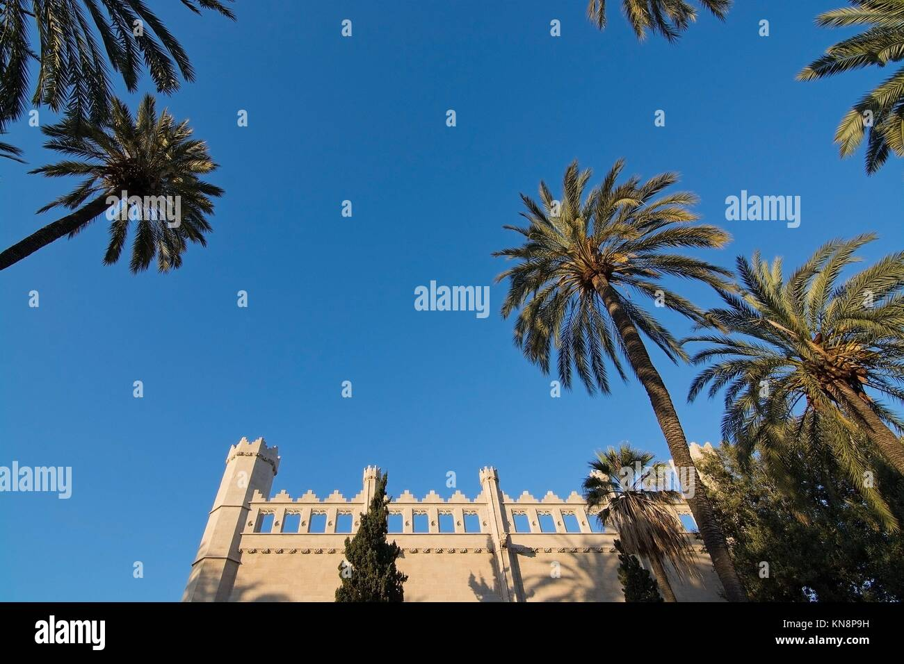La Llotja medieval building, palm trees and blue sky in Palma de Mallorca, Balearic islands, Spain Stock Photo