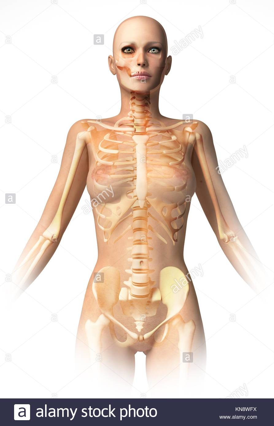 Woman body, with bone skeleton superimposed. With clipping path included. Anatomy image. - Stock Image