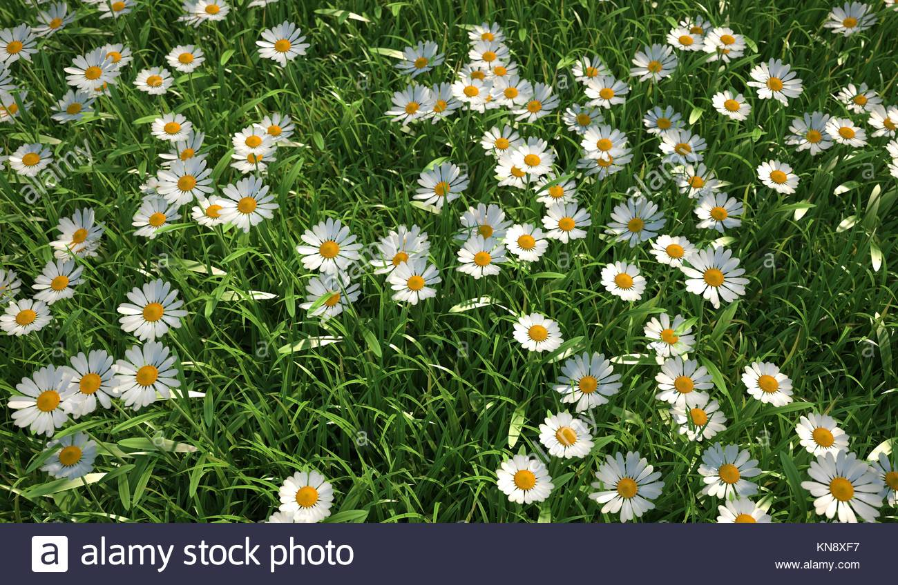 Plenty of daisy flowers bird eye stock photos plenty of daisy close up bird eye view of a grass meadow plenty of daisy flowers viewed izmirmasajfo