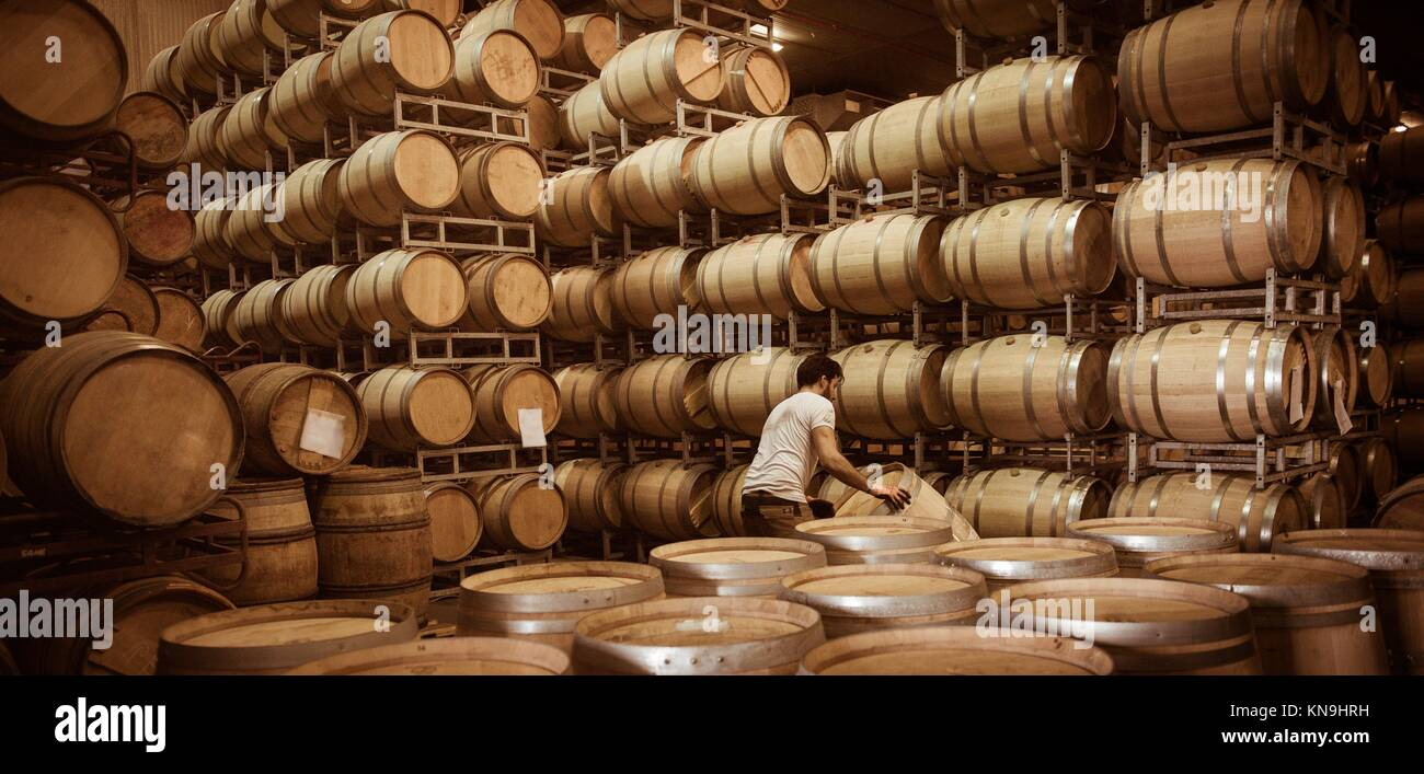 Winemaker barrels moving up or down by rolling on the ground in a large storage cellar, Bordeaux Vineyard, France. - Stock Image