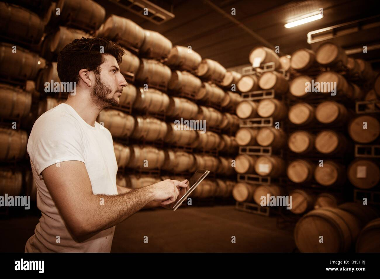 Winemaker counting the barrels with a tablet in a large storage cellar, Bordeaux Vineyard, France. - Stock Image