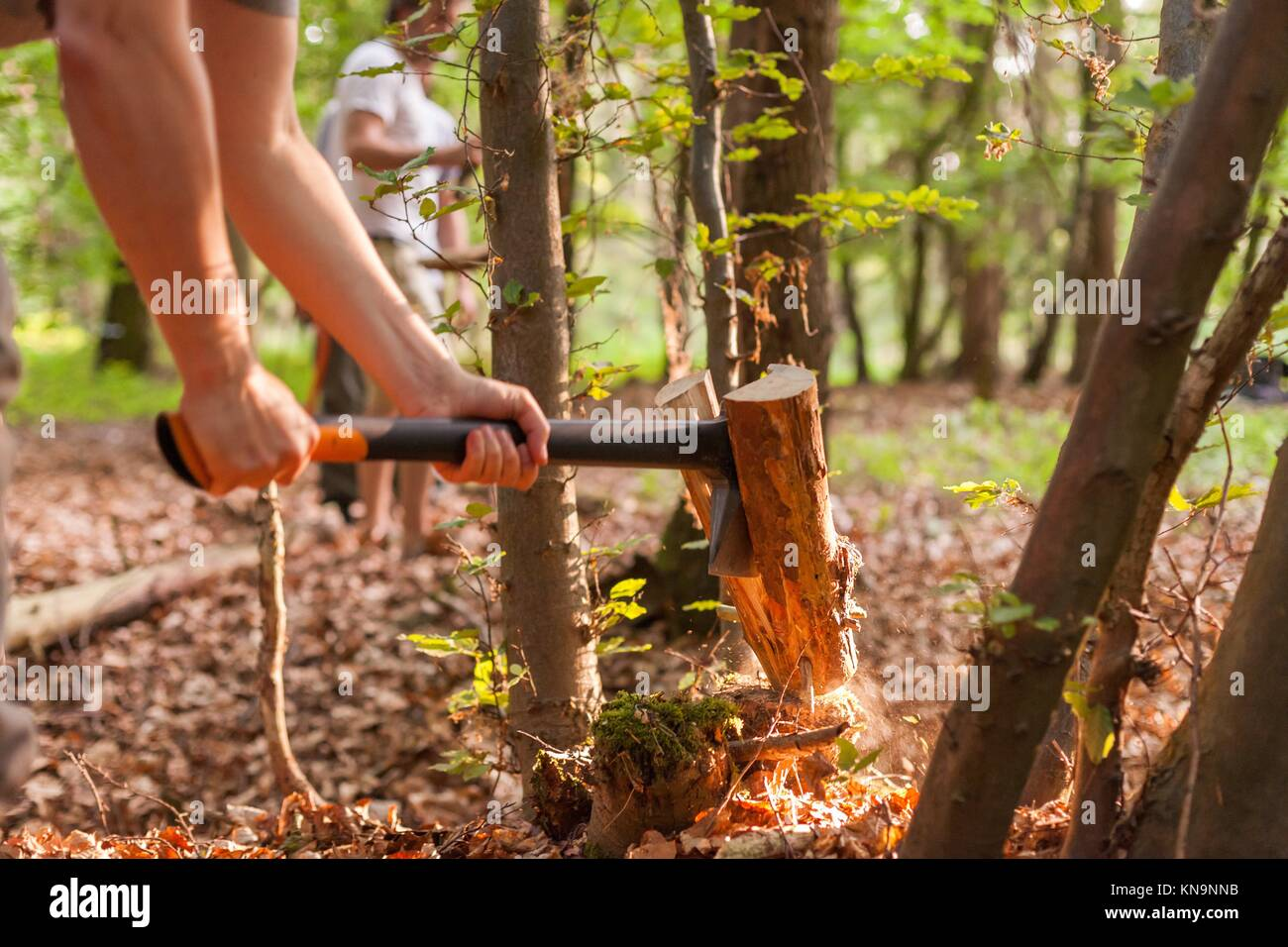 Splitting a log of firewood with an axe in a forest. - Stock Image
