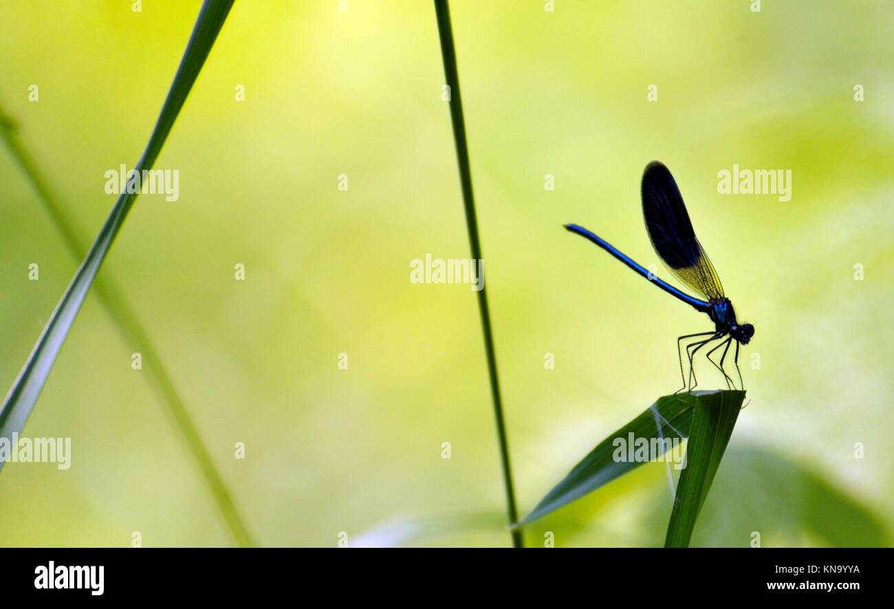Swadow of a dragonfly sitting on leaf. Stock Photo