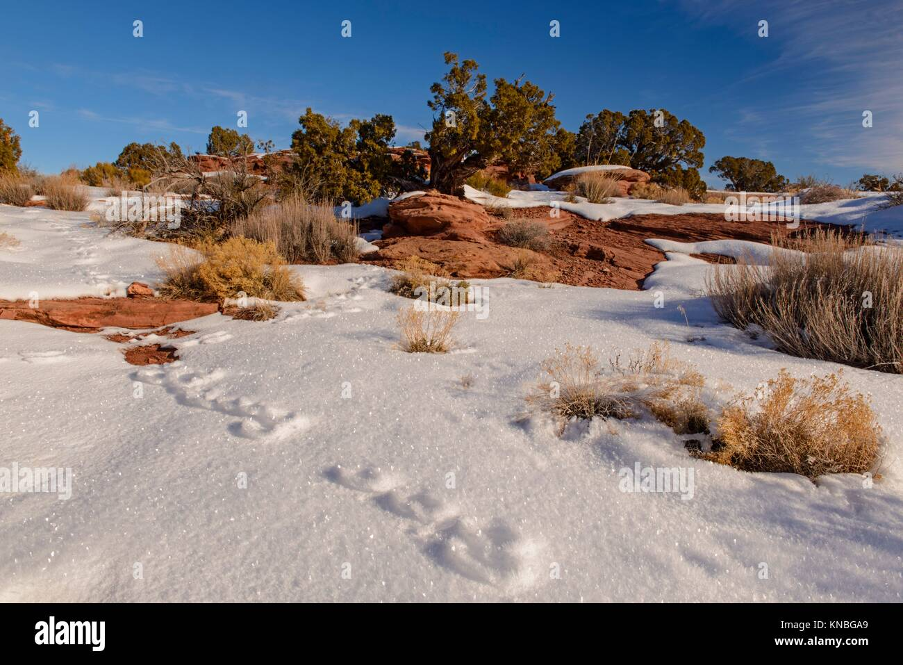 Cottontail Tracks High Resolution Stock Photography and Images - Alamy