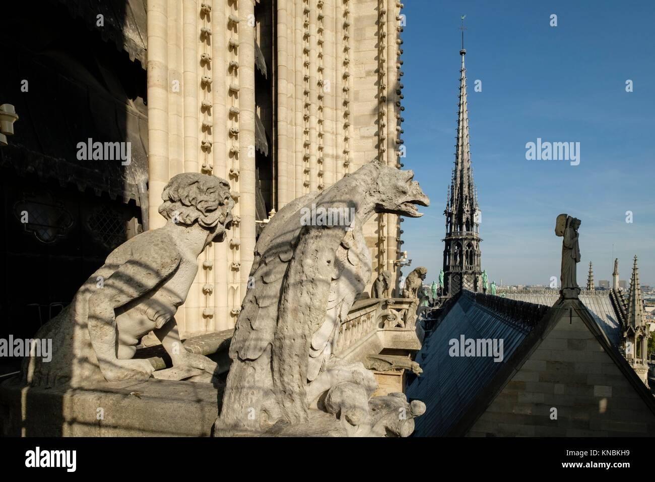 Gargoyles, Notre Dame Cathedral, Paris, France - Stock Image