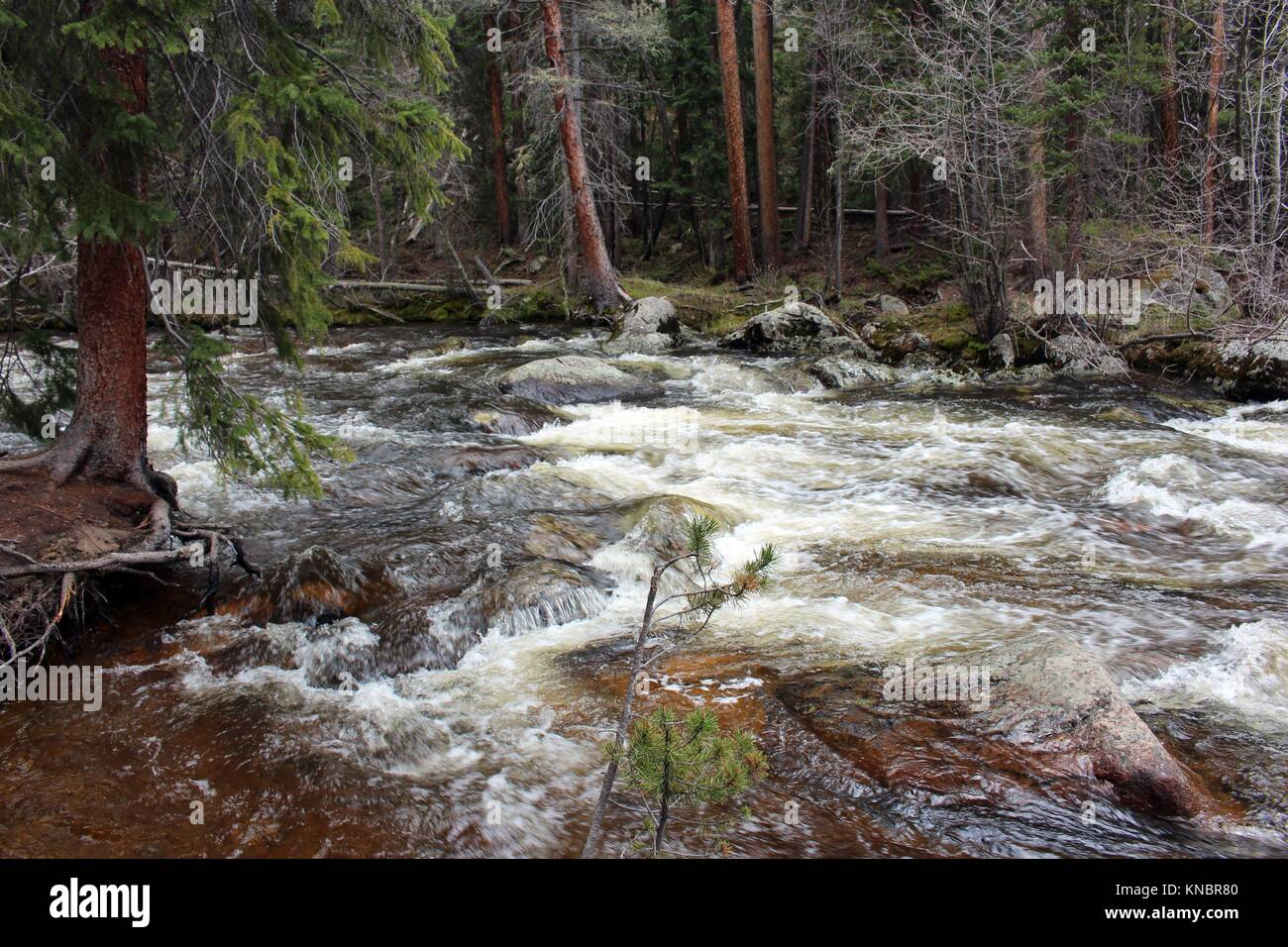 Rushing water of the North Inlet going to Cascade Falls in Rocky Mountain National Park, Estes Park, Colorado, USA - Stock Image