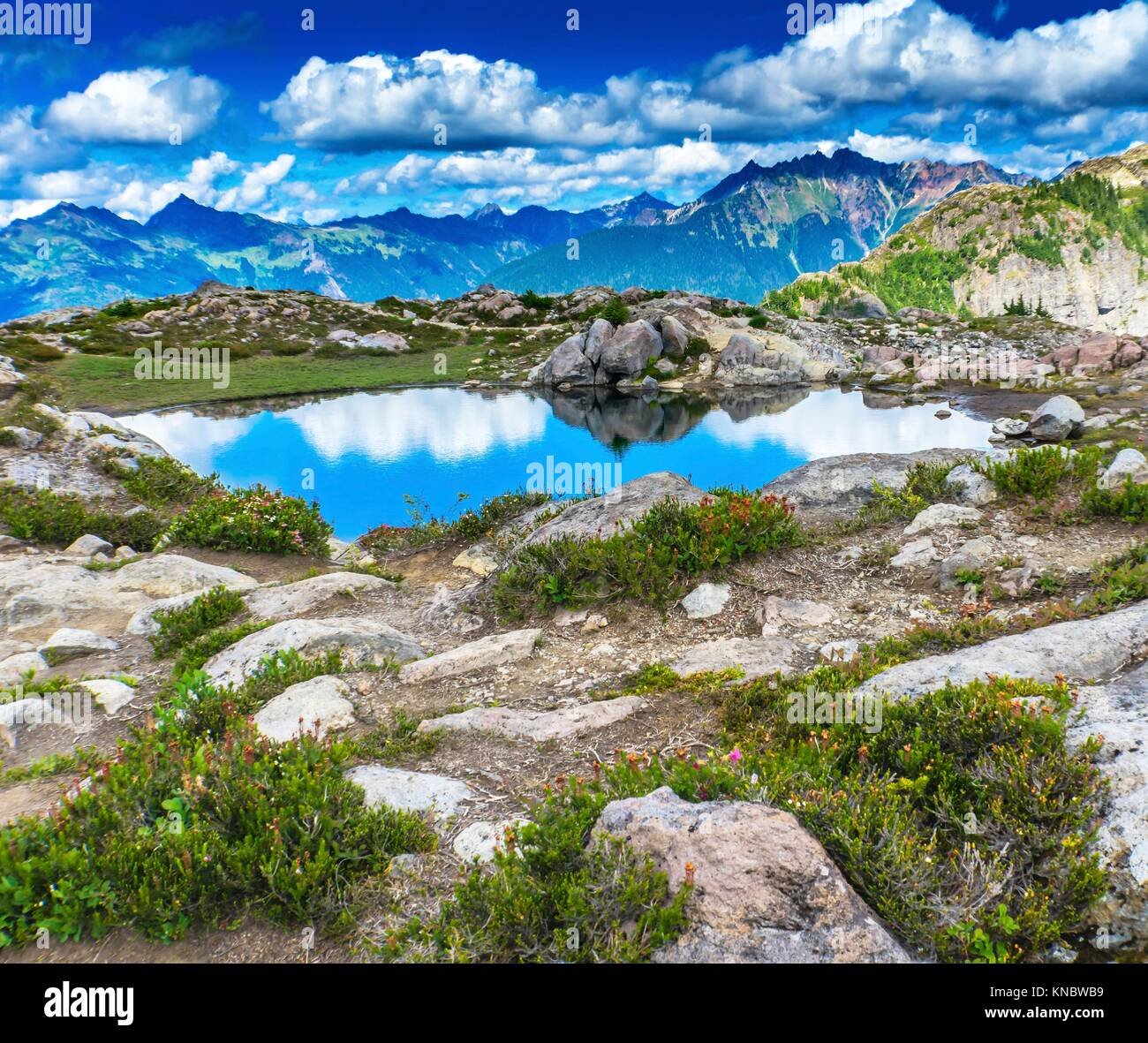Pool Pond Reflection Summer Artist Point Mount Baker Highway. Pacific Northwest, Washington State, Snow Mountain - Stock Image
