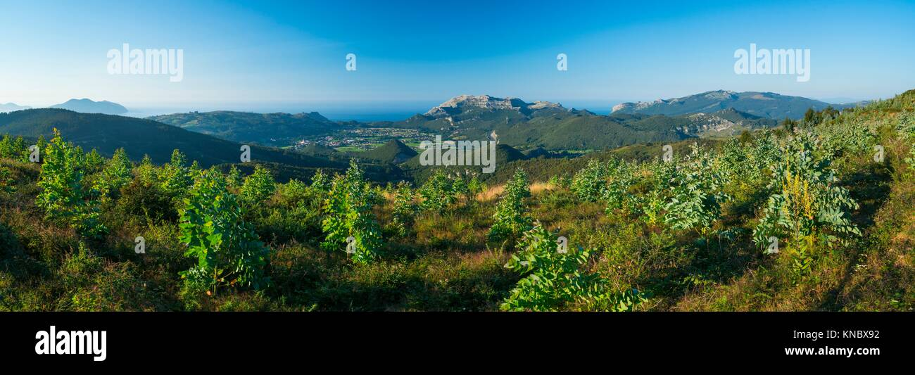 Panoramic of the Valley of Liendo and plantation of Eucalyptus, MOC Montaña Oriental Costera, NATURA 2000, - Stock Image