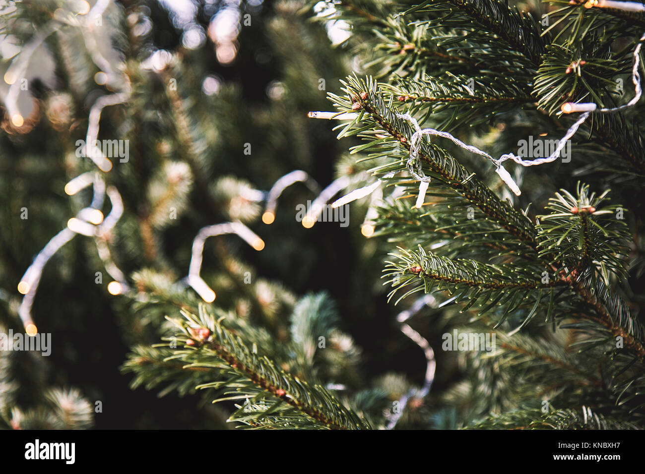 Green fir twigs with tiny sparkling deko lights hanging as electric garland, blurry background - Stock Image