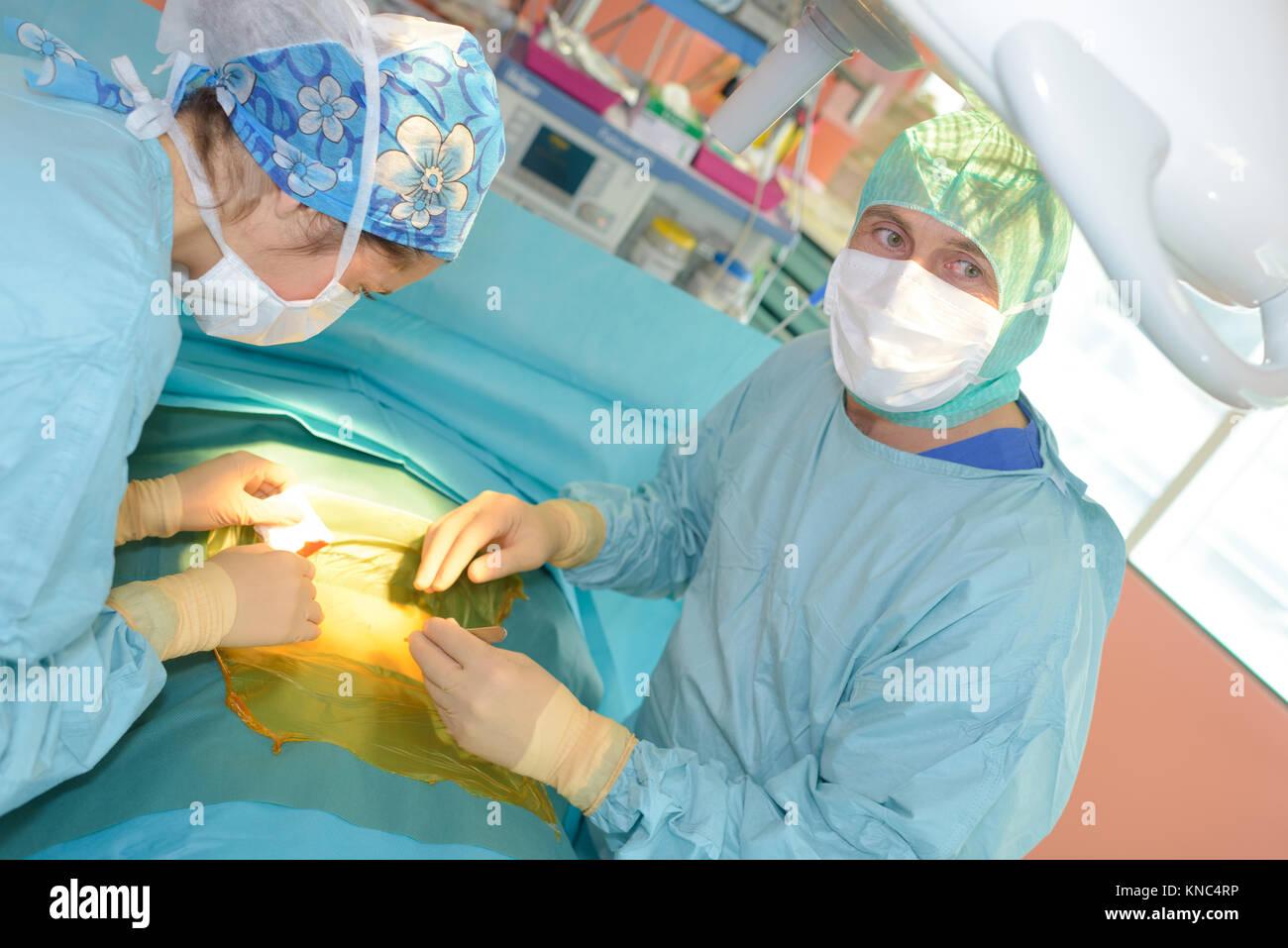 veterinarian surgeons in operating room - Stock Image