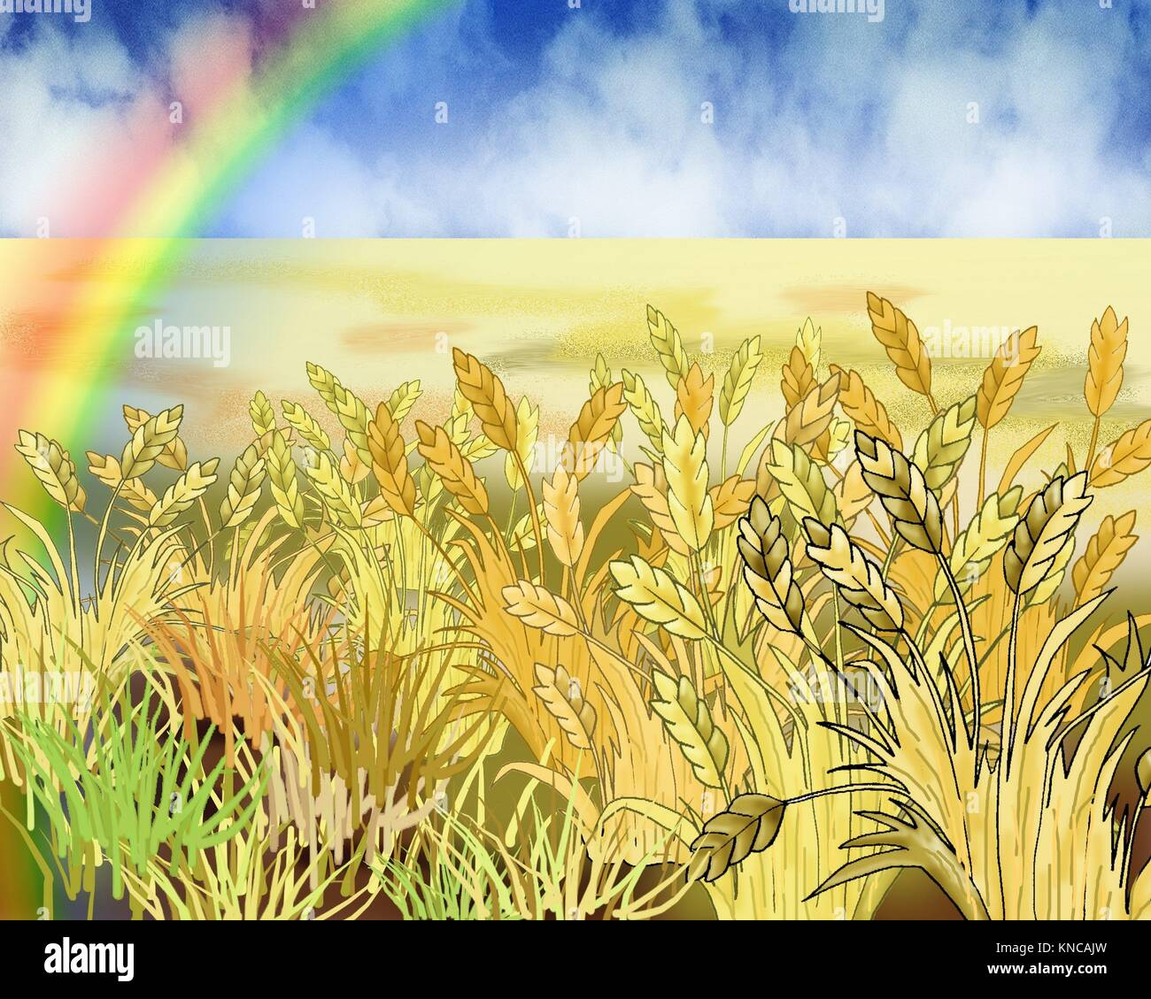 Digital Painting, Illustration of a Rainbow Over Wheat Field in Summer Day. Cartoon Style Character, Fairy Tale - Stock Image