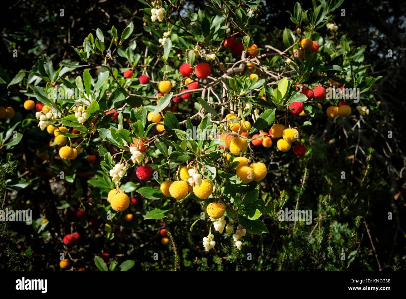 Comuna de Bunyola, communal land, Bunyola, Mallorca, balearic islands, spain, europe. - Stock Image