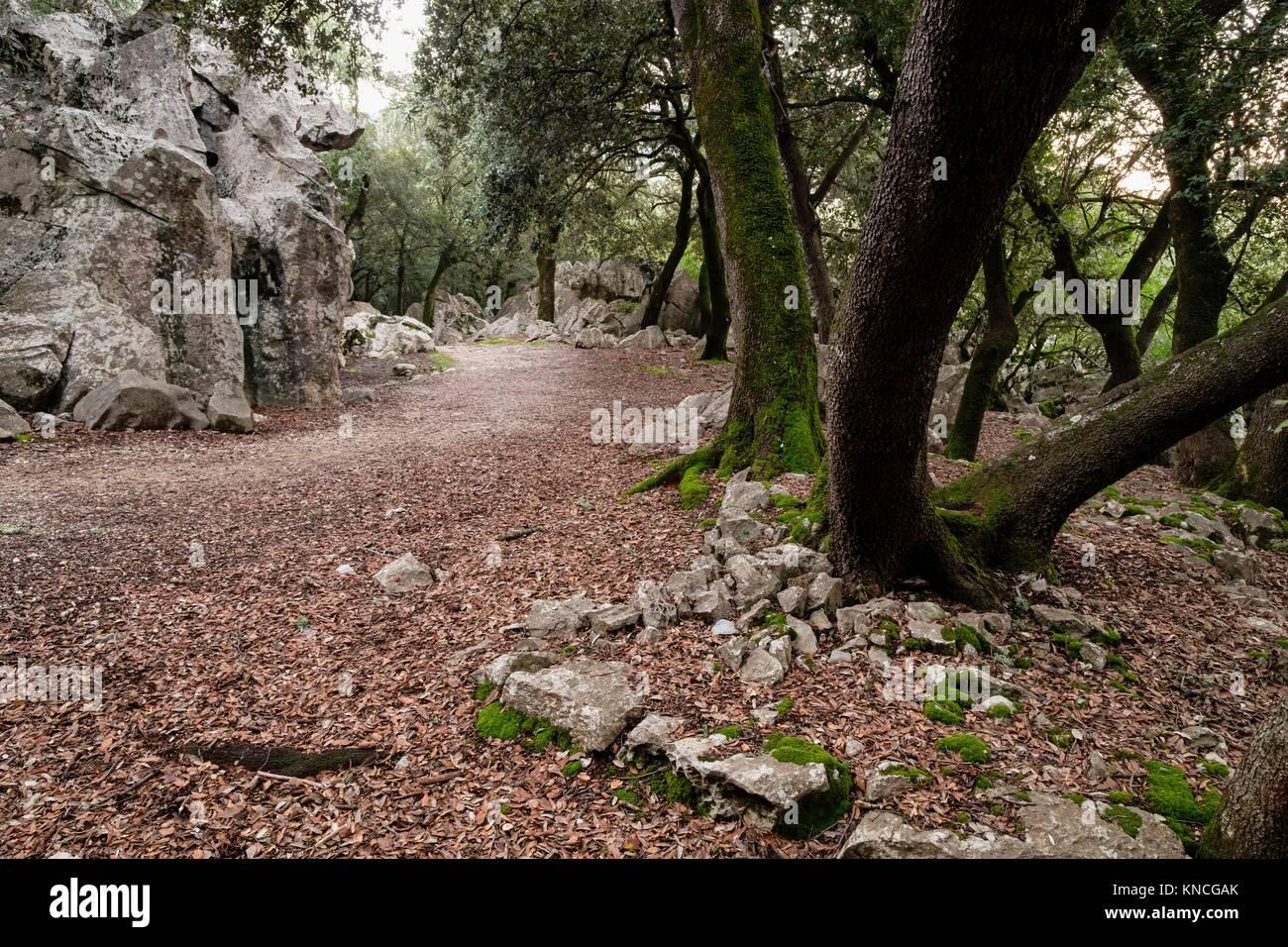 Forest of oaks and karst rock, Es Pixarells, escorca, natural site of the Sierra de Tramuntana, Mallorca, Balearic Stock Photo