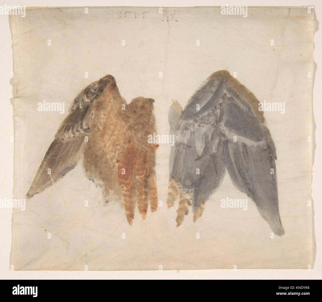 Bittern's Wings: study showing both sides. Artist: In the manner of Albrecht Dürer (German, Nuremberg 1471 - Stock Image