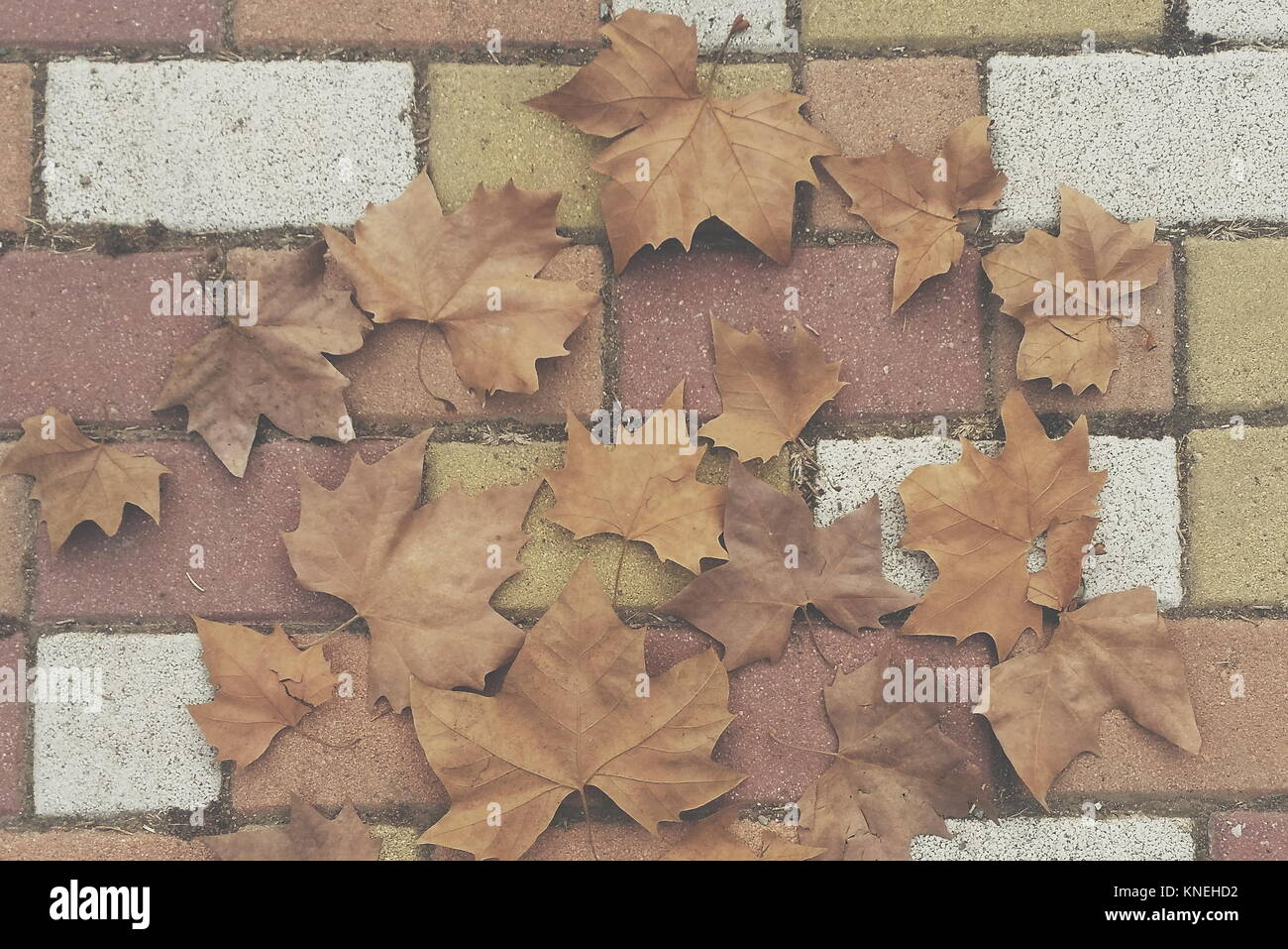 Autumn leaves on the pavement - Stock Image