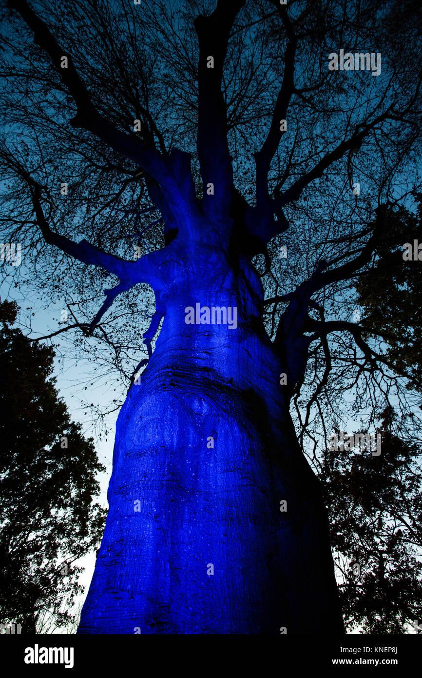 Enormous blue lit tree trunk - Stock Image
