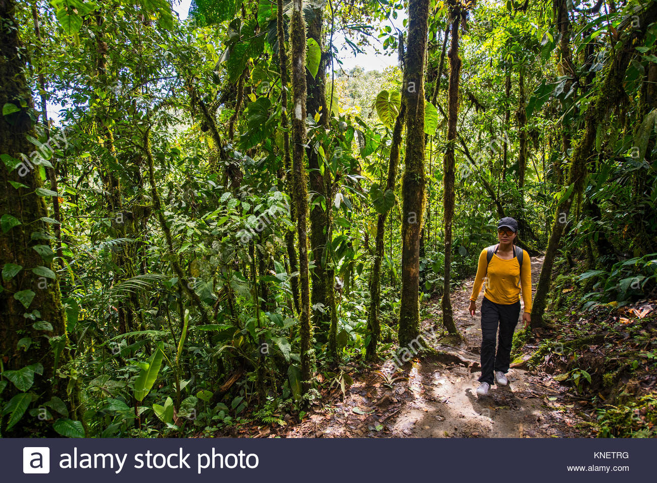 Woman exploring the rainforest in Mindo, Pichincha, Ecuador, South America - Stock Image