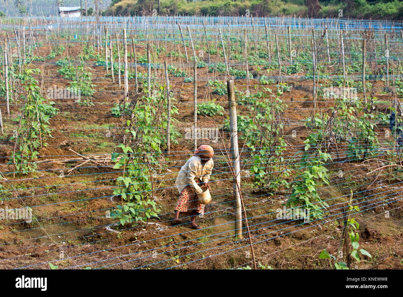 Farmer Kerala Stock Photos & Farmer Kerala Stock Images - Alamy