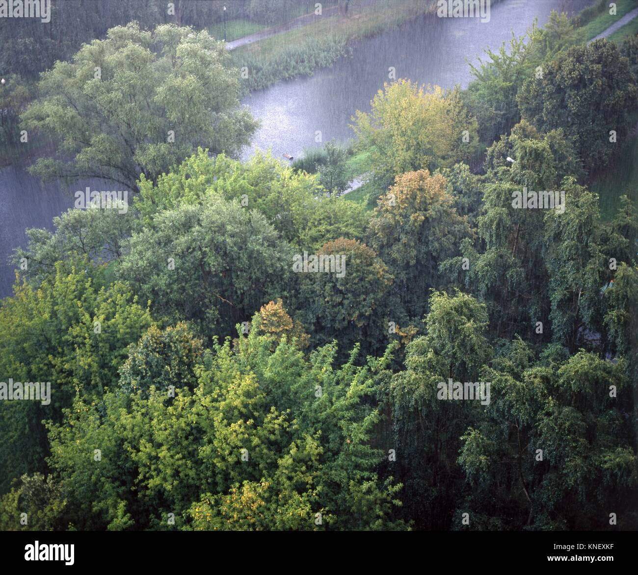 Summer rain. Poland - Stock Image