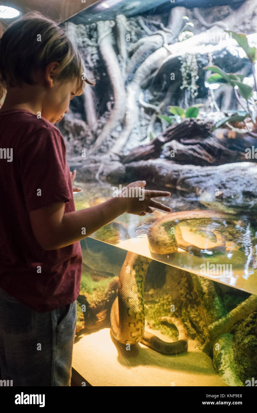 Boy gazing at snake in water of display case at natural history museum Stock Photo