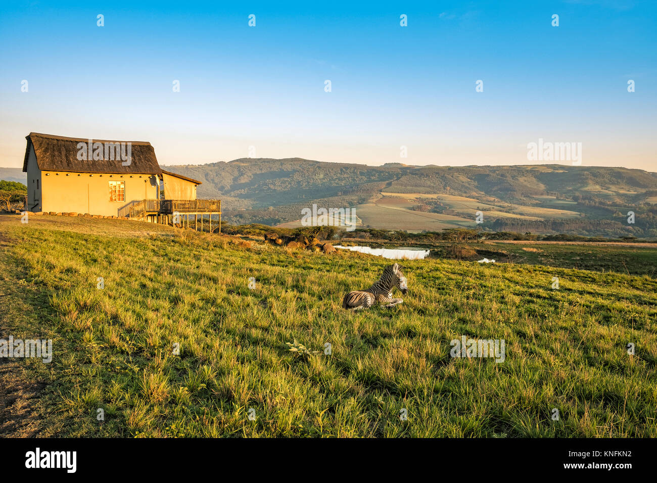 Picturesquely situated lodge in the Drakensberg mountains, South Africa. The center of the photo shows a baby zebra - Stock Image