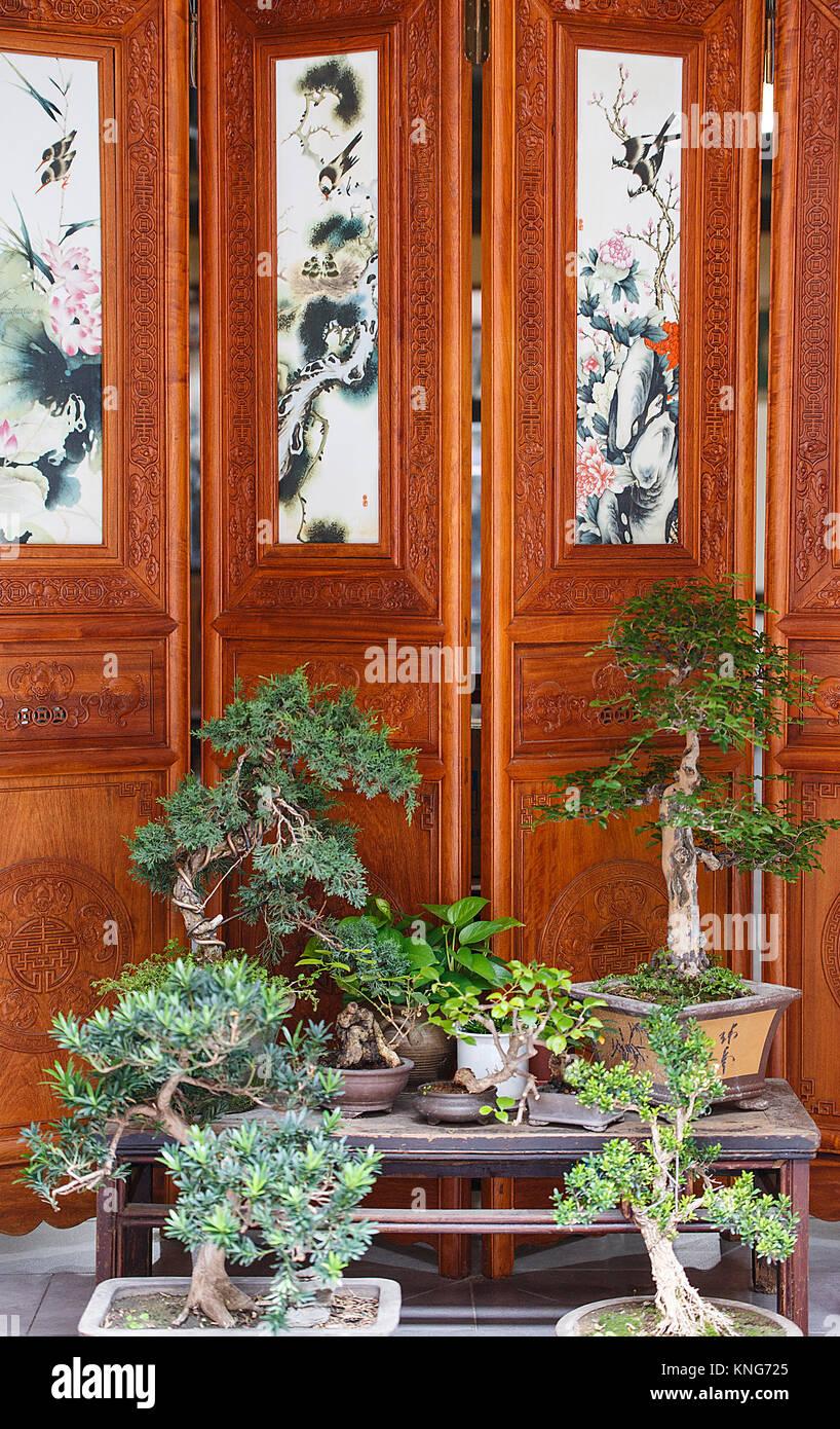 bonsai group in a xian shop, china - Stock Image
