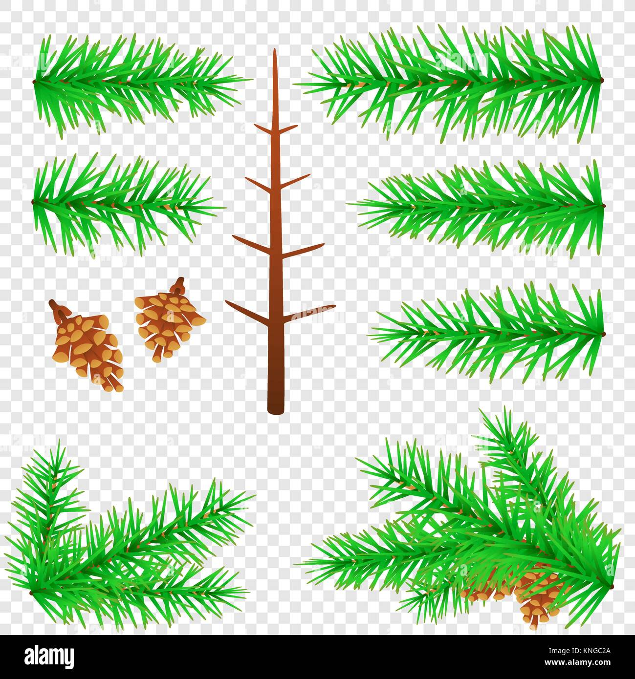 spruce branch transparent background - Stock Vector
