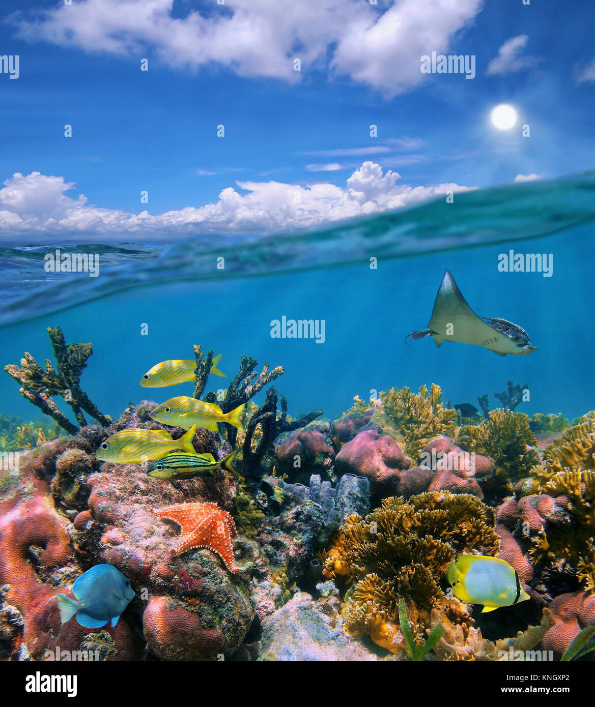 Seascape over and under sea surface, cloudy blue sky and colorful coral reef with tropical marine life underwater, - Stock Image